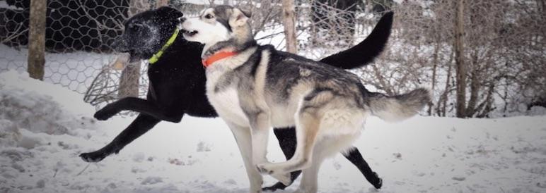 Vermittlung Hunde