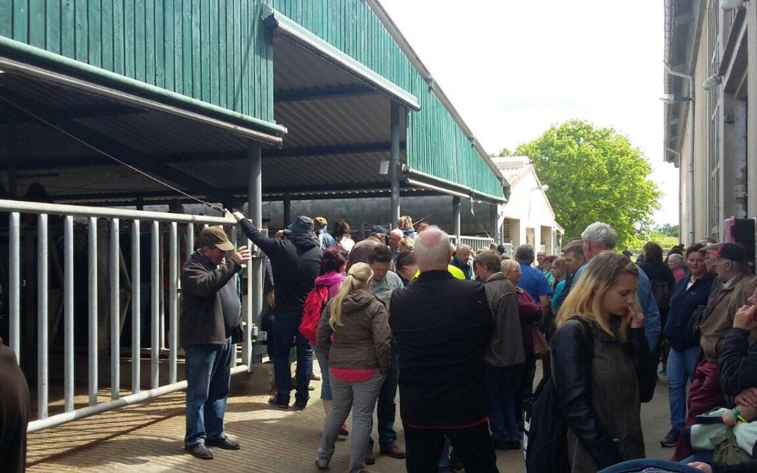 Versteigerung von 71 Pferden in Lichterfelde