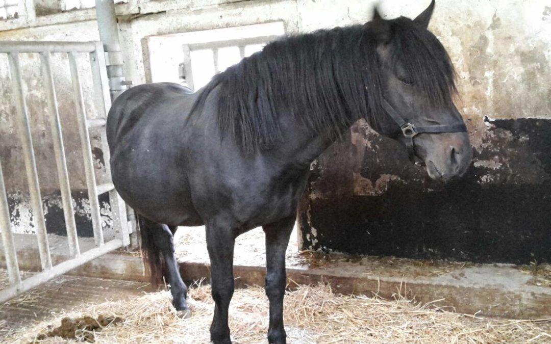 Spenden Pott für Stendal-Pferde