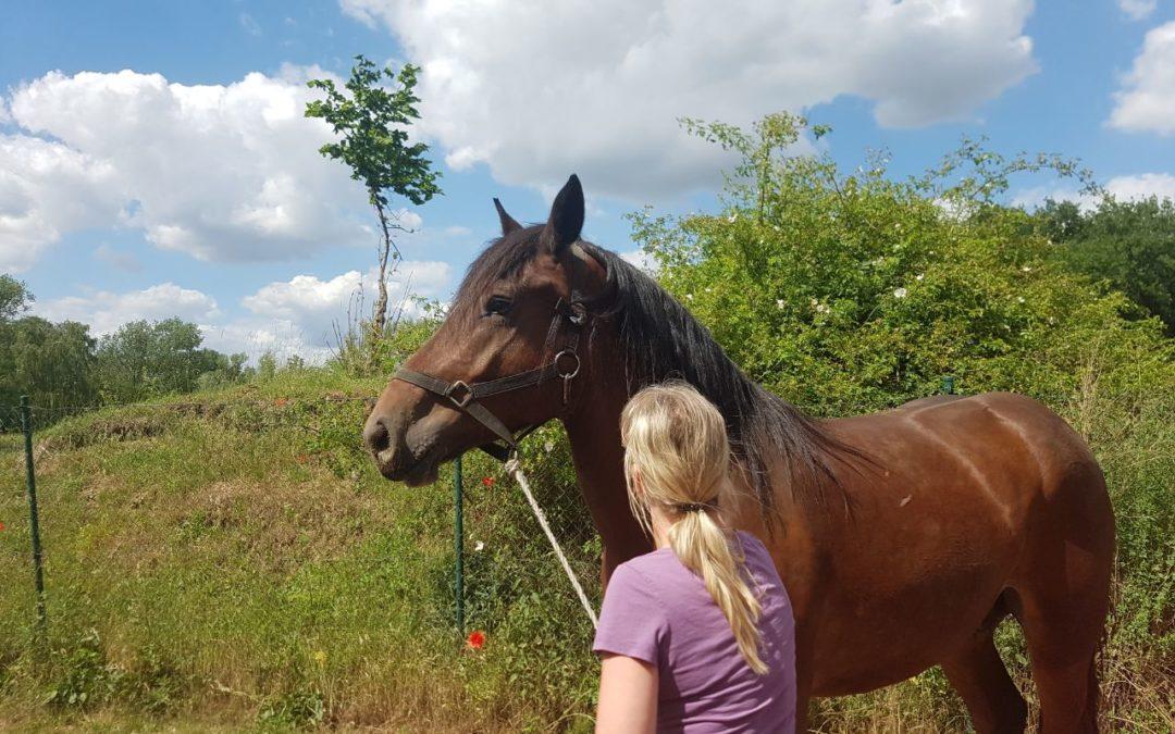 Spendenpott Lichterfelde- Mutter und Tochter wieder vereint