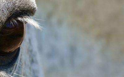 """Das schmutzige Gesicht hinter """"Tierschutz"""""""